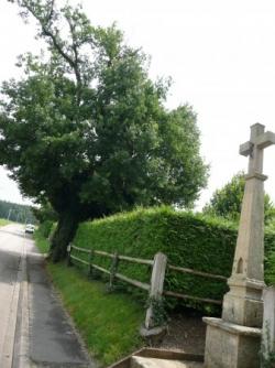 Le Chêne des Saints à Bleurville (Vosges)