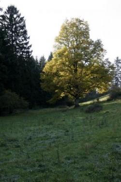 2009-10-635a.jpg
