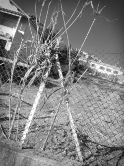 2010_03_106 n&b.jpg