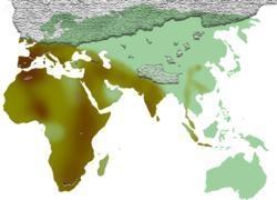 Entre - 500.000 et - 300.000 ans : l'Acheuléen...