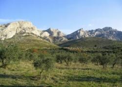 """Mistal est mort : """"La Provence en deuil""""...."""