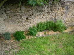 jardin juillet 2012