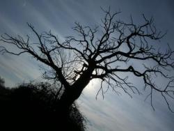Haute-savoie, nature morte