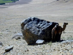 Afghanistan, faune