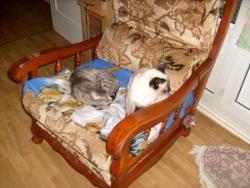 Mes chats et ceux des autres
