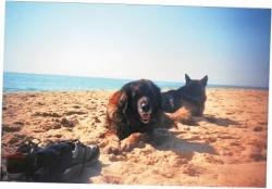 Tiglon et Athos se reposent sur la plage