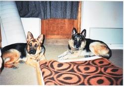 Nos deux chiens à Risoul