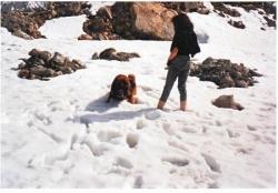 Tiglon peine dans la neige