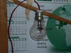 ingénieux électriciens