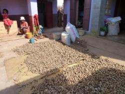 cocons de soie sauvage