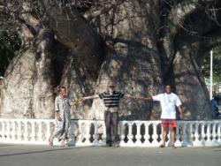 le gros baobab 2.JPG