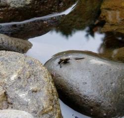 Bientôt une grenouille...