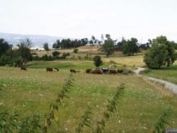 Civeyrac (hauteurs de Brioude)