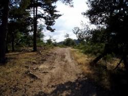 chemin boisé (Baraque David)