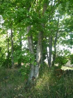 espace entre les choses, les branches