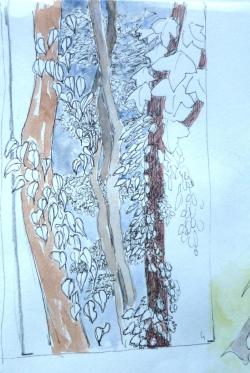 espace entre les choses, les branches, le feuillag