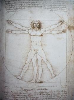 15 L'homme de Vitruve.jpg