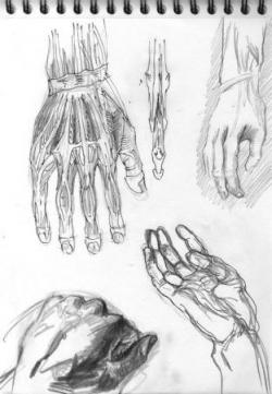 67 planche d'anatomie.jpg