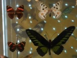 Couleurs et papillons