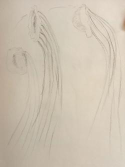 Méduse vue sur une vidéo