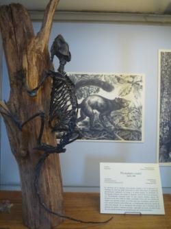 Galerie de paléontologie 18 sept. 2017