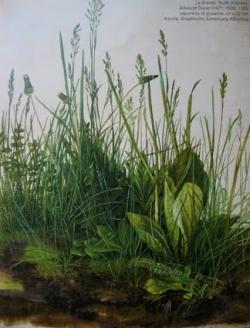Dürer herbe