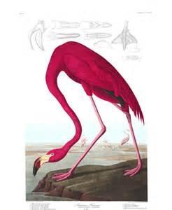 Audubon Oiseaux d'Amérique