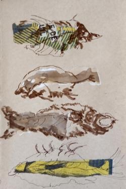 Galerie de Paléontologie Les contrastes 2-02-2020