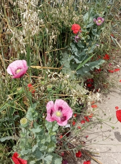 Le jardin des plantes