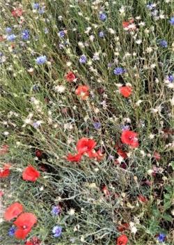 lundi 16 juin Le jardin des plantes