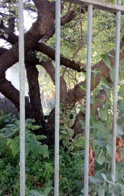 Jardin des plantes,