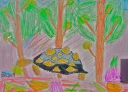 Fleur tortue rayonnée - 01.jpg