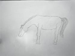Madeleine cheval - 35.jpg