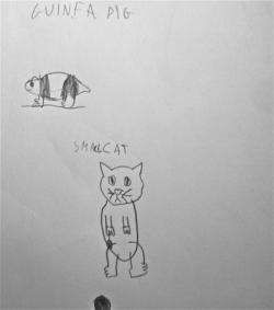 Logan chat et cochond'inde.jpg