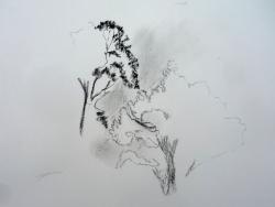 L'arbre, du croquis au travail personnel