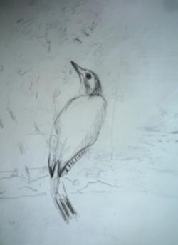 Etude d'oiseau