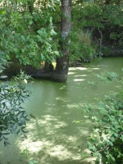 l'arbre rentrant dasn le canal