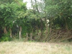 Rythme des arbres, des pieux des barrières ...
