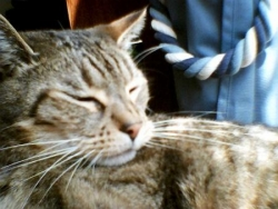 gribouille le chat de la maison