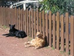 Les chiens 'Tina' et 'Kidu' sur le Lieu de Vie de