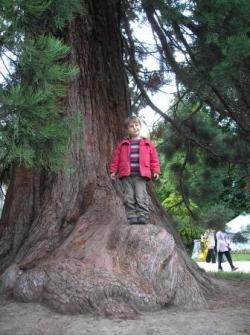 Un géant du parc Montreau