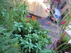 Plantes grasses, succulentes & je-ne-sais-pas-quoi
