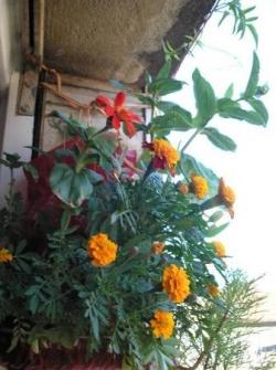 Sac-à-fleurs toujours en expansion