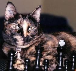 elle joue aux échecs