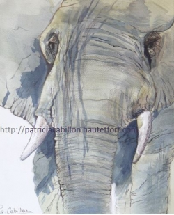 L'Eléphant 1