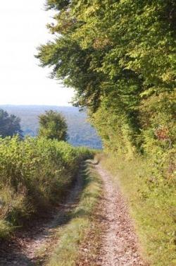 Chemin de Bourgogne