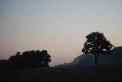 Arbres de Bourgogne