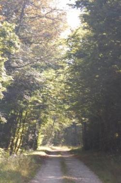 Clair-obscur bourguignon