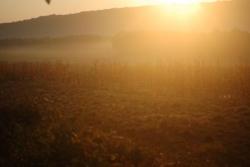 Le soleil se lève sur les maïs