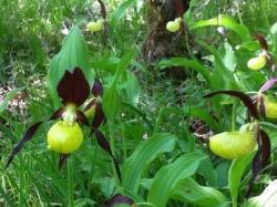 Sortie orchidées 2011